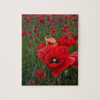 Poppy Field Puzzle/Jigsaw Puzzle with Tin