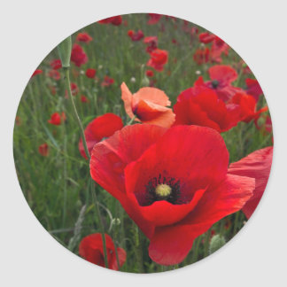 Poppy Field Stickers