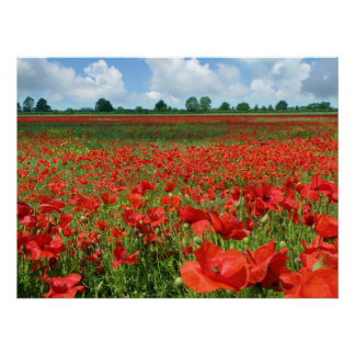 Poppy Fields Canvas Print