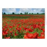 Poppy Fields Greeting Cards