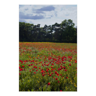 Poppy Fields I print