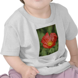 Poppy flower and meaning tshirts
