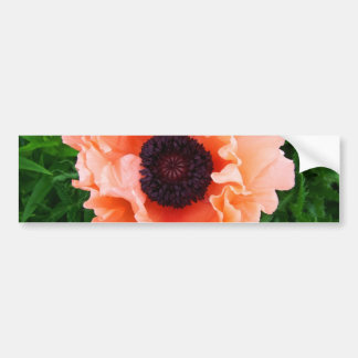Poppy Flower Bumper Sticker