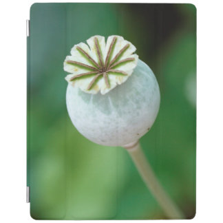 Poppy Flower Head Seed, Western Cape iPad Cover