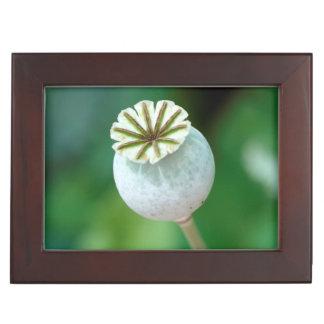 Poppy Flower Head Seed, Western Cape Keepsake Box