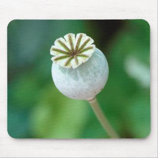 Poppy Flower Head Seed, Western Cape Mouse Mat
