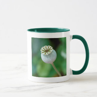 Poppy Flower Head Seed, Western Cape Mug