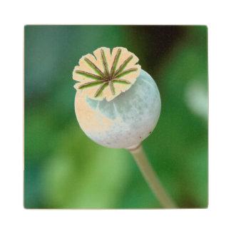 Poppy Flower Head Seed, Western Cape Wood Coaster