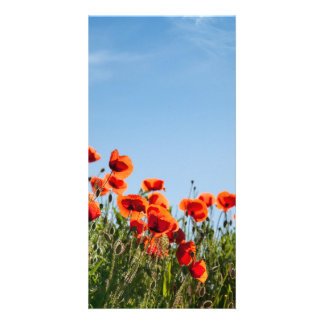 Poppy Flowers Custom Photo Card