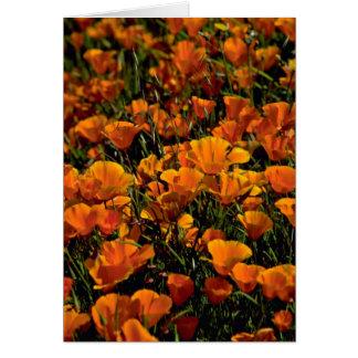 Poppy flowers Pink flowers Card