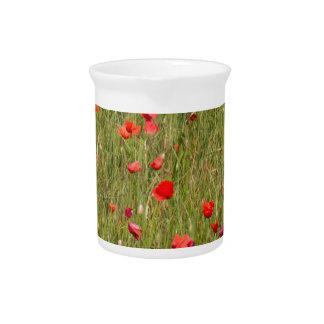 poppy in spring pitcher