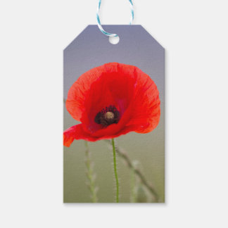 poppy in the meadow gift tags
