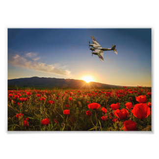 Poppy Mossie Art Photo