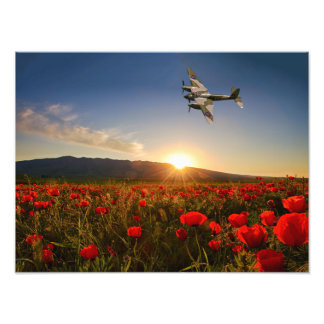 Poppy Mossie Photo Art
