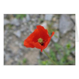 Poppy, Newgrange, Northern Ireland Card