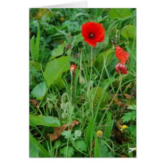 'Poppy' Notecard