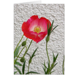 Poppy notelet card