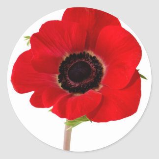 POPPY of Remembrance Round Sticker