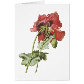 poppy(Papaver sp.) by Redouté Greeting Card