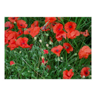 Poppy photograph in English countryside Poster