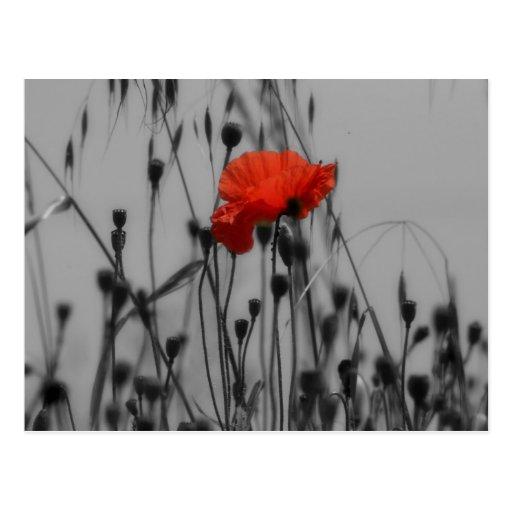 Poppy Post Cards