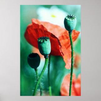 poppy posterdruck