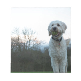 Poppy the labradoodle dog notepad