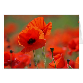 Poppys. Card