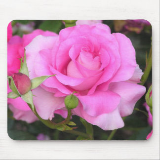 Popularity kind of rose, mouse pad of manuumeiyan,
