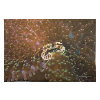 Porcelain crab in sea anemones, North Sulawesi Placemat