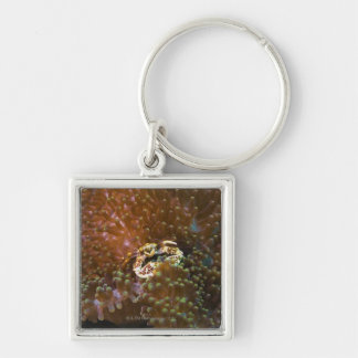 Porcelain crab in sea anemones, North Sulawesi Silver-Colored Square Key Ring