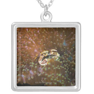 Porcelain crab in sea anemones, North Sulawesi Silver Plated Necklace