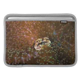 Porcelain crab in sea anemones, North Sulawesi Sleeve For MacBook Air