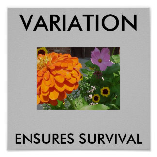 Porch Flowers - Darwin's Natural Selection Poster