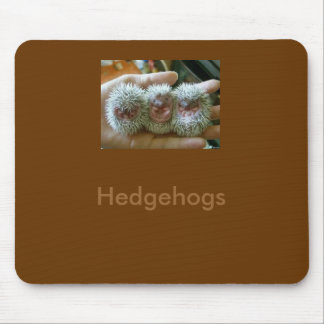 porcupine-baby, Hedgehogs Mouse Pad