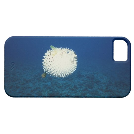 Porcupine Fish iPhone 5 Covers
