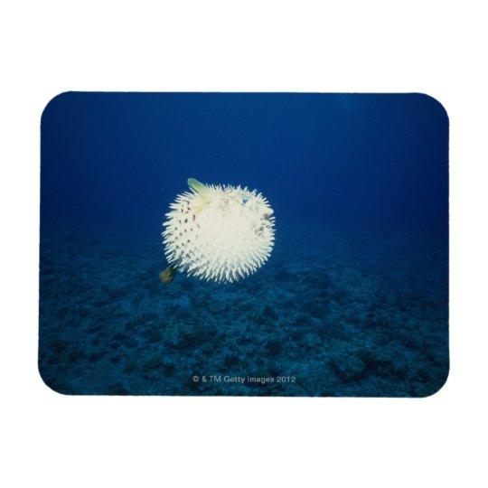 Porcupine Fish Rectangular Photo Magnet
