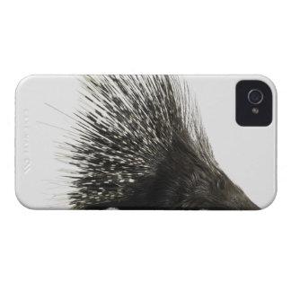 Porcupine iPhone 4 Case