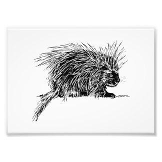 Porcupine Photo Print