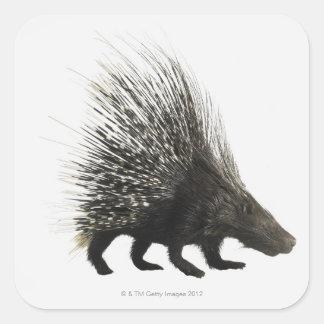 Porcupine Square Sticker