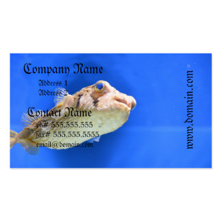 Porcupinefish Business Cards