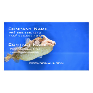 Porcupinefish Pack Of Standard Business Cards
