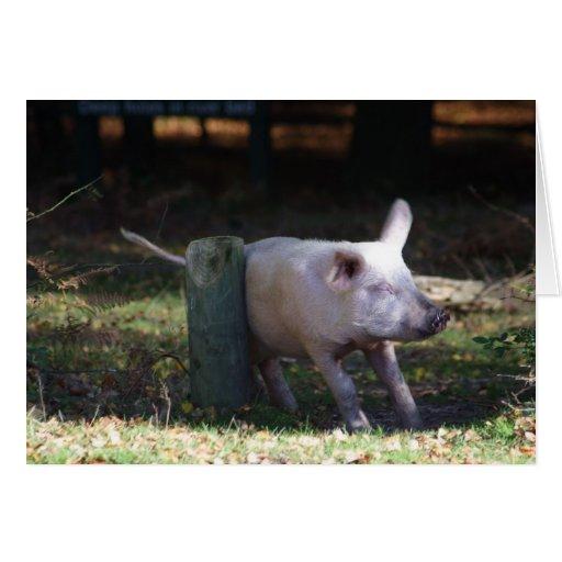 Pork scratching card