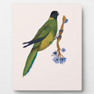 port lincoln parrot, tony fernandes plaque