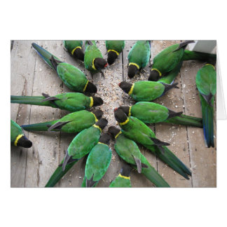 Port Lincoln Parrots Australia Greeting Card
