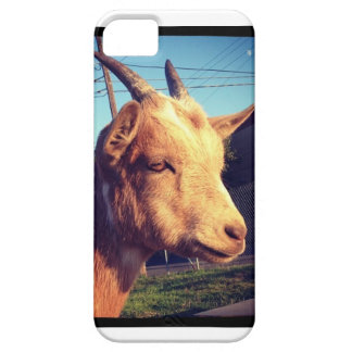 Portland Belmont Goat Photo  Iphone Case