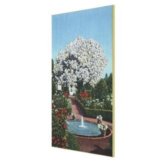 Portland, Oregon - Spanish Pool and Ghost Tree Canvas Print