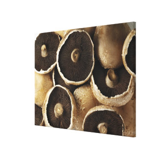 Portobello Mushrooms on White Background Gallery Wrapped Canvas