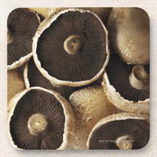 Portobello Mushrooms on White Background Coasters