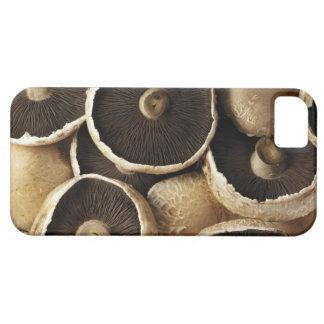 Portobello Mushrooms on White Background iPhone 5 Cases